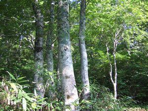 日本の自然 最新知見 地形・地質・植生を知る