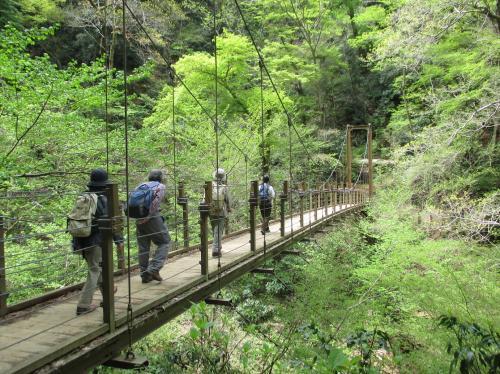 森の観察 高尾山