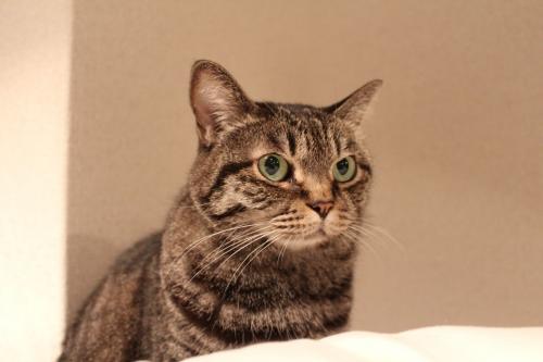 猫の病気のサインと対処法