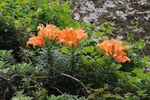 観音崎の海岸植物とランチ
