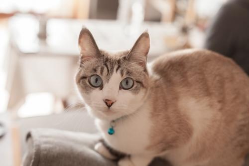 表情豊かな猫の写真を撮ろう!