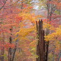 樹木医と歩く野幌森林公園