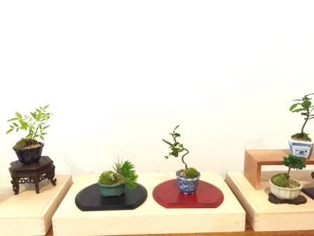 てのひら盆栽