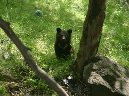クマからはじまる森のつながり