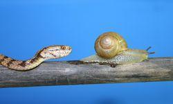追うヘビと逃げるカタツムリ 共に進化する左右の非対称性