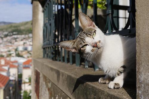 世界のネコに出会う旅―クロアチア編