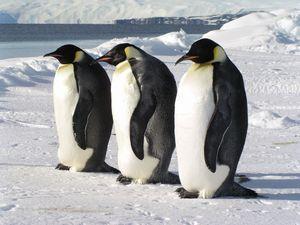 極寒の南極に豊かな生命をみる