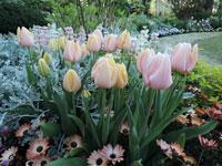 (特)季節を彩る自分好みの庭・花壇~春から初夏編