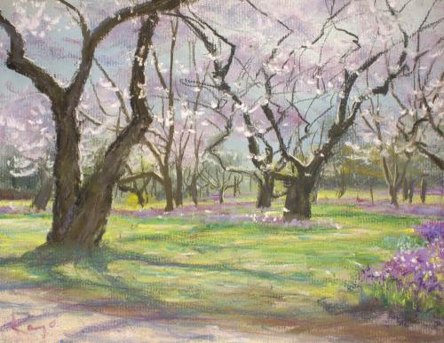 パステルで桜を描く