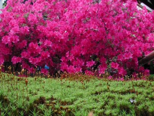 小さな緑・コケ植物の魅力