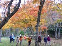樹木医と歩く秋の野幌森林公園