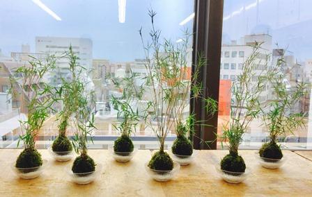 てのひら盆栽~苔玉を作る