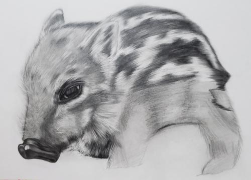 鉛筆画で年賀状-モノトーンの世界