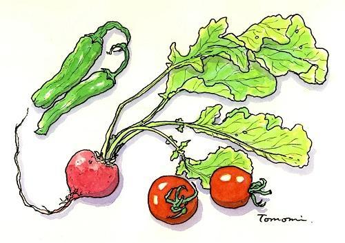 ペンで描くスケッチ1日―野菜
