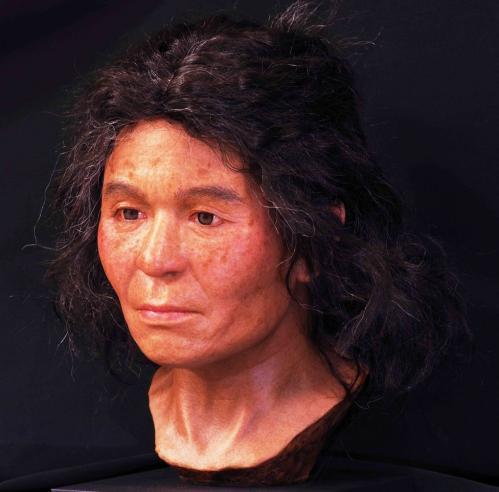 ゲノム情報から復顔された礼文島の縄文女性 提供:国立科学博物館