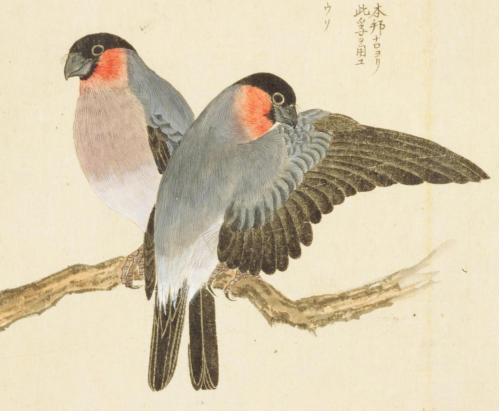 身近な鳥と日本人