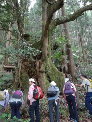 奥多摩の巨樹を見る