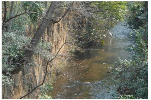 玉川上水小平鷹の台