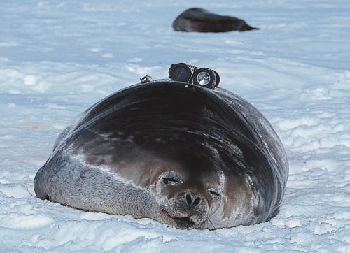 海洋動物の知られざる生態