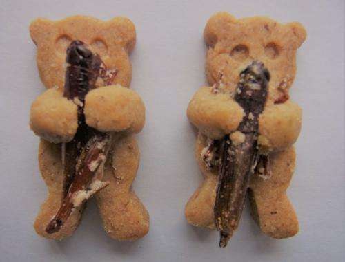 イナゴだっこクマさんクッキー