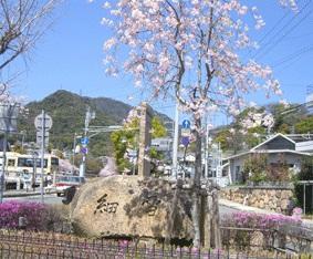 「細雪」文学碑と「紅しだれ桜」