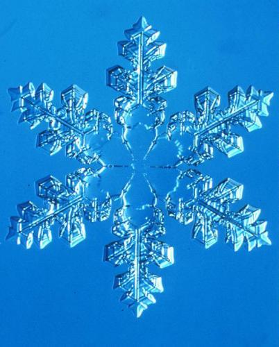 雪の結晶(講師撮影)