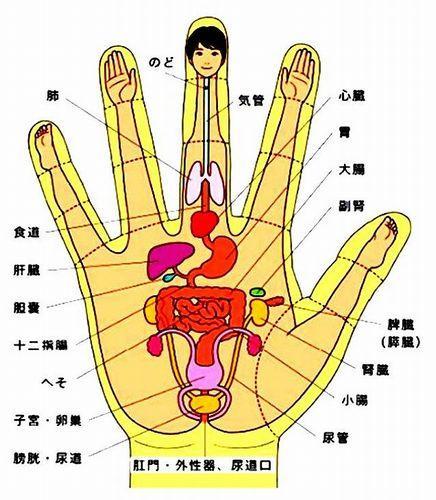 手のひらの図