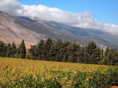 レバノン・ベカア高原の葡萄畑