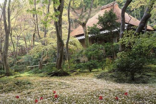 祇王寺の散桜(橋本健次先生撮影)