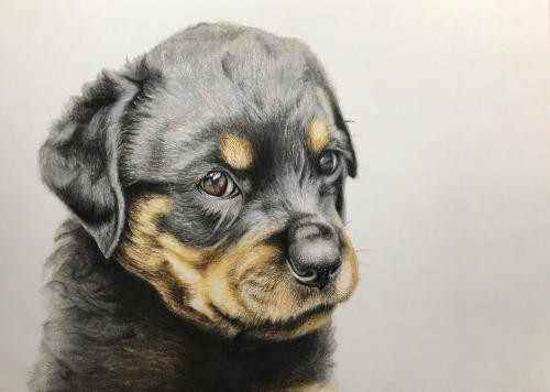 2月は犬を描きます