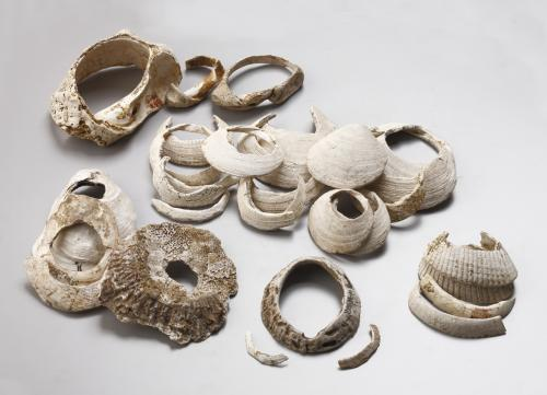 保美貝塚出土貝製装身具(貝輪など)